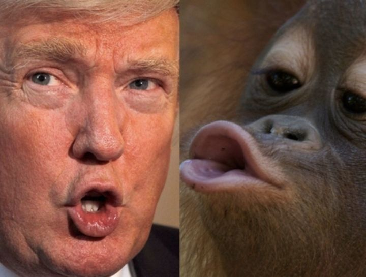 Trump Ape Pouty Close up