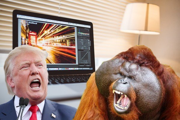 Trump Orangutan Anger Unleashed